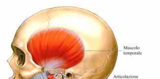 odontoiatra.it, atm, muscolo massetere, dolore facciale