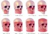 odontoiatra.it, scanora 3D e 3DX